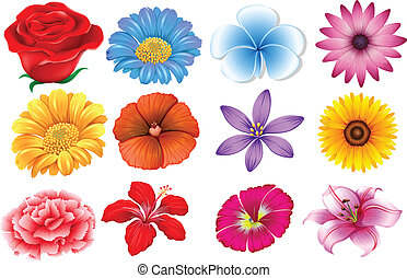 Set of different flowers - Illustration of the set of...