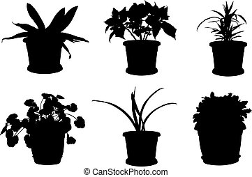 Set of different flowers in pots