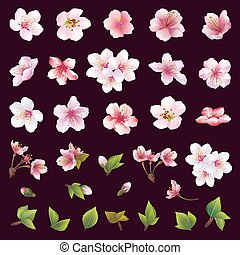 Big set of different beautiful cherry tree flowers and leaves isolated on black background. Collection of white, pink , purple sakura blossom - japanese cherry tree. Elements of floral spring design. Vector illustration
