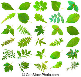 set of different green leaves over the white background