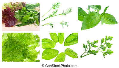 set of different herbs