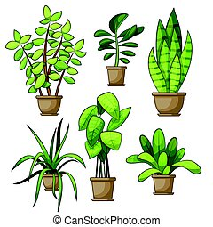 Set of different house plants