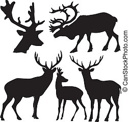 set of different kind of deers