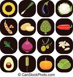 Set of different kinds of vegetable