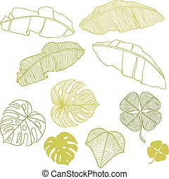 Set of different leaves. A vector illustration