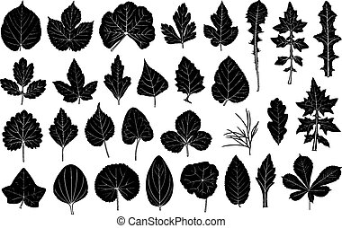 Set of different leaves