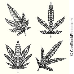 Set of different leaves of marijuana with hatching. The object is separate from the background. Vector engraving element
