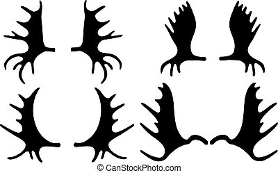 Set of different moose antlers