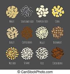 Set of different seeds and graines vector illustration in a cartoon flat style isolated on gray background. Wheat, barley, sesame, sunflower seeds, corn millet, mustard, pumpkin seeds, cocoa, coffee, buckwheat and rice vectors.