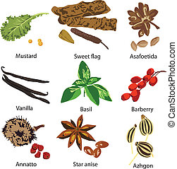 set of different spices