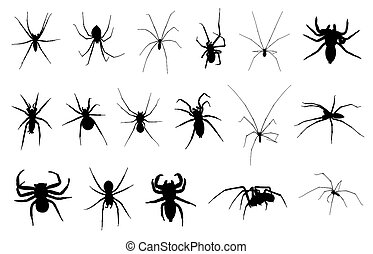 Set of different spiders