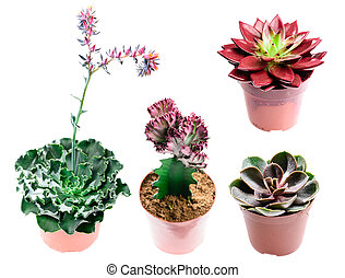 Set of different succulents in different types isolated on white