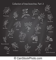Set of different tree branches.