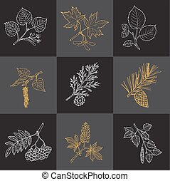 Set of different tree branches
