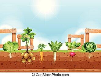 Set of different vegetable crop