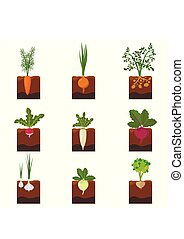 Set of different vegetables plant growing underground:...
