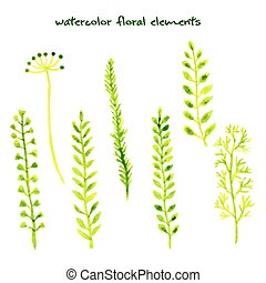 Set of different watercolor hand drawn herbs.