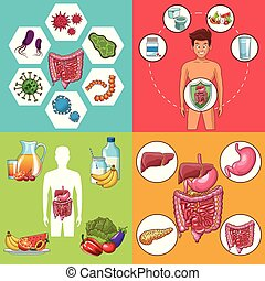 Set of digestive system cards collection vector illustration...