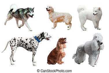 Set of dogs. Isolated over white