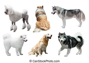 Set of dogs over white