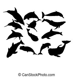 Set of dolphins