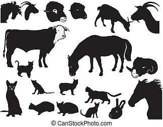 set of domestic animals