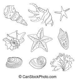 Set of doodle shells isolated on white