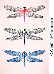 Set of dragonflies