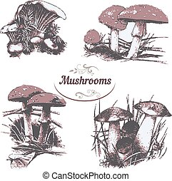 Set of drawings mushrooms