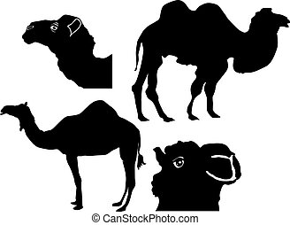 set of dromedaries