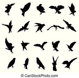 Set of eagle silhouettes-2
