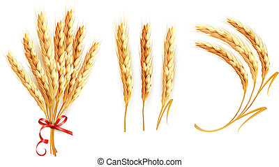 Set of ears of wheat. Vector.