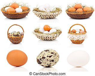 set of eggs on a white background
