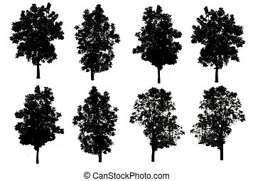 set of eight trees silhouettes isolated on white background with clipping path