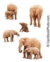 Set of Elephants Isolated - Set of Baby and Adult Elephants...