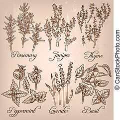 Set of essential herbs