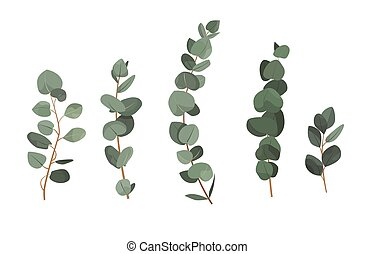 Set of eucalyptus branches isolated on white background
