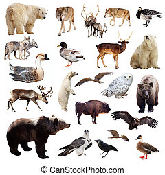 Set of european animals. Isolated over white