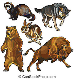 set of european wild animals - set with wild animals, beasts...