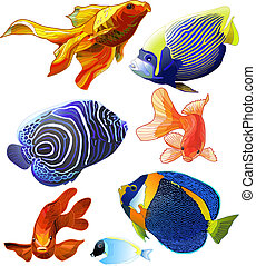 Set of Exotic Colorful Fish. - Set of exotic colorful fish....