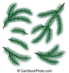 set of fir branch