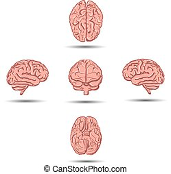 Set of five human brains with shadow from different views