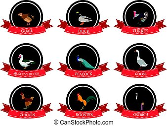 set of flat icons with a bird name