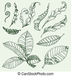 Set of floral design elements - coffee and fern leafs