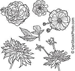 """Set of floral design elements (from my big \""""Flower-set..."""