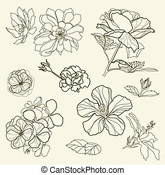 design elements - Set of floral design elements