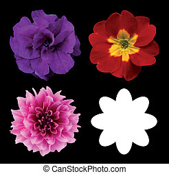 Set of flower heads isolated on black. Vector