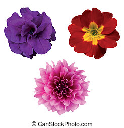 Set of flower heads isolated on white. Vector illustration