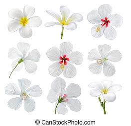 set of flower on white background