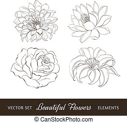 Set of flowers isolated over white.